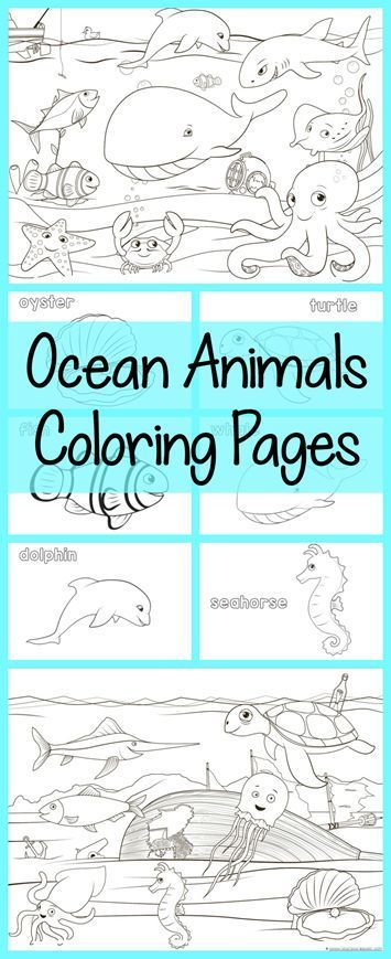 Ocean Animals Coloring Pages All Free Color A Dolphin Whale Octopus