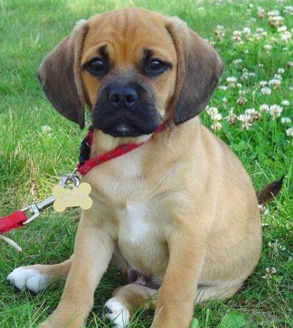 50 Cute Mixed Breed Dogs You Need To Know About Slice Ca