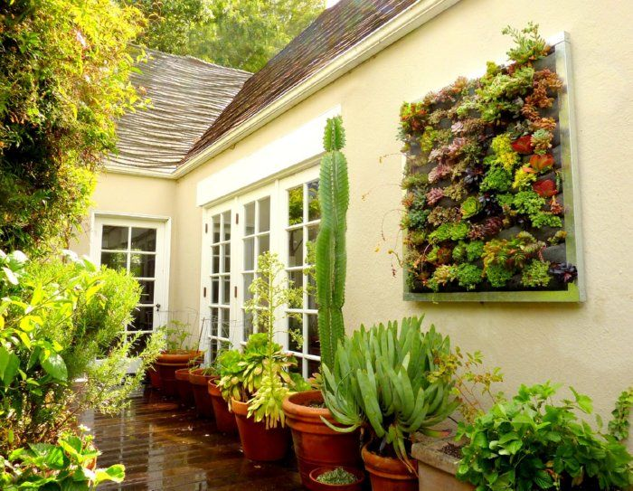succulents   Succulents   Pinterest   Succulent wall, Gardens and Plants
