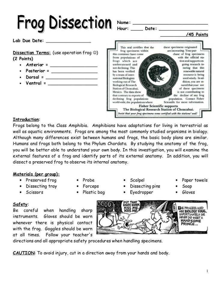 BIOLOGY FROG DISSECTION LAB This is a frog dissection lab The – Frog Dissection Worksheet