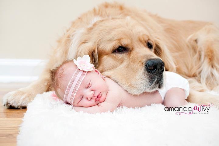 Beautiful Sleeping Baby And Dog Photography Dog Baby Sleeping Baby Chesapeake Retriever Newborn And Dog Baby Dogs Newborn Photography Girl