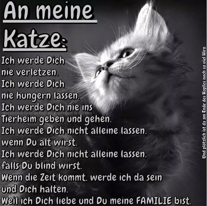 Pin Von Monika Sailer Auf Spruche Geliebte Katze Katzen Zitate Spruche Katze