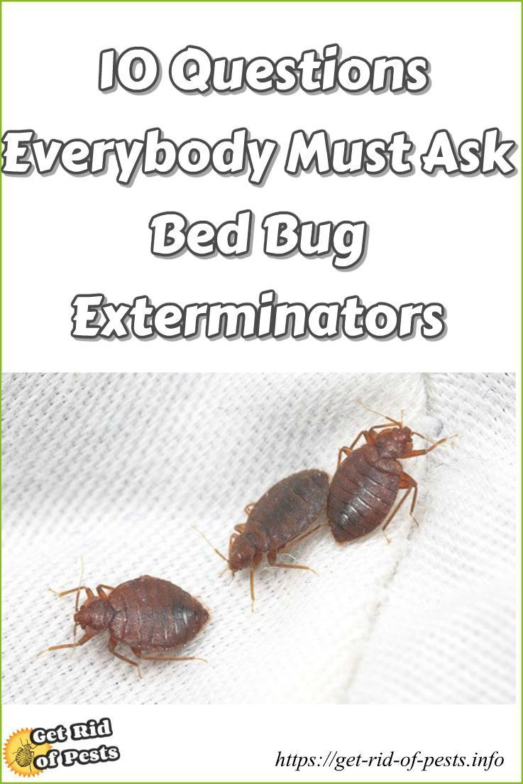 Get rid of bed bugs do it yourself pest control bedbug
