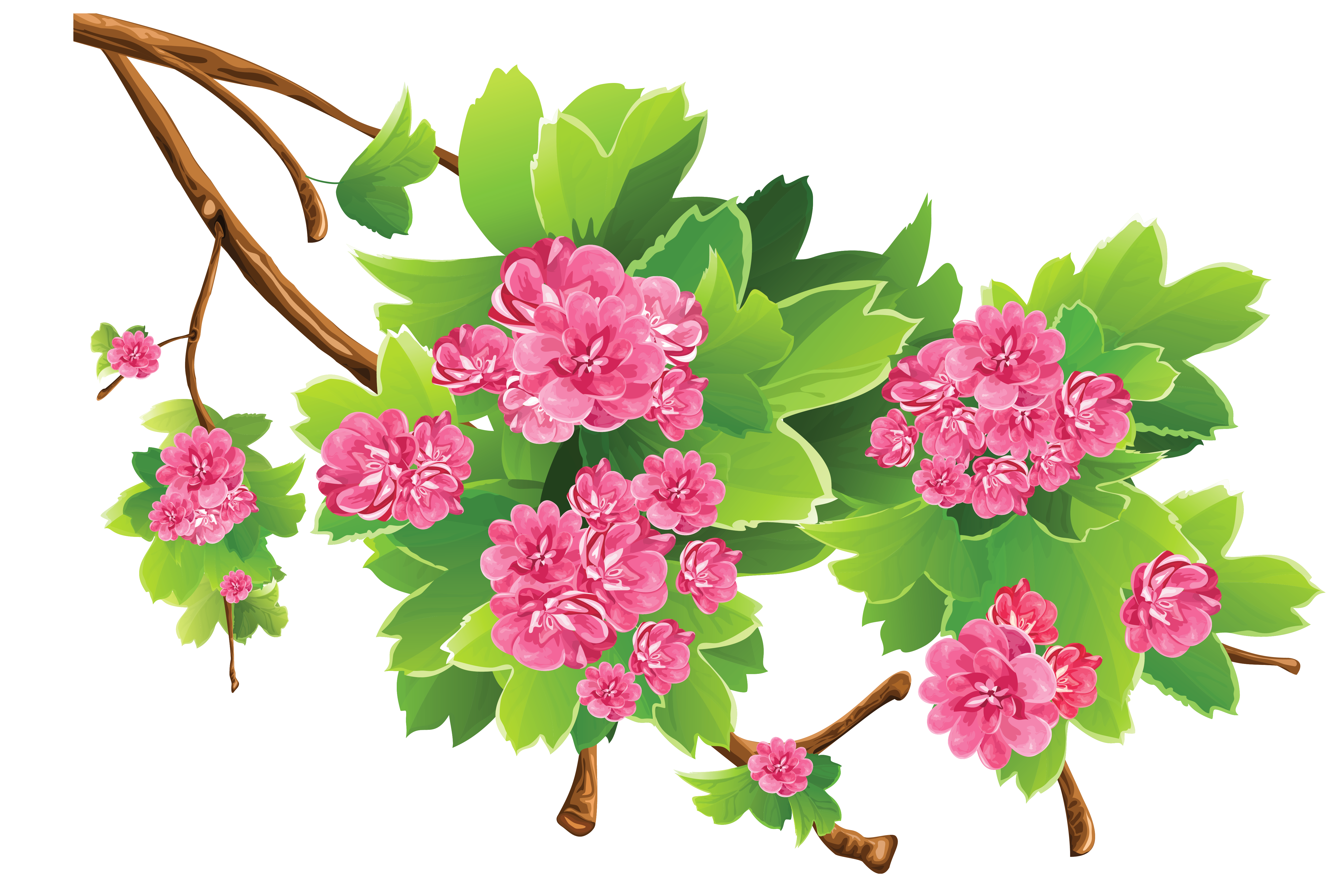 Spring Branch Transparent PNG Clipart Picture Flower