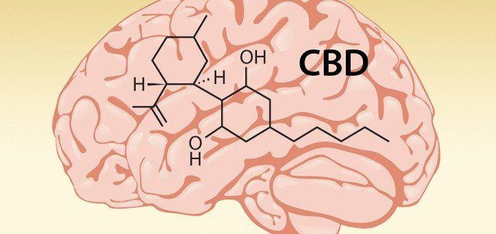 5 Ways #CBD Affects Your Brain - #MMJ http://www.leafscience.com/2017/03/30/5-ways-cbd-affects-brain/