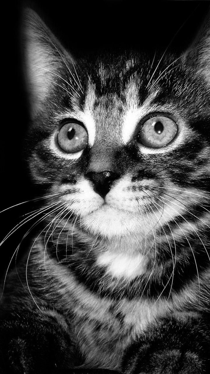 Cat Toy Kitten Ben Torode Close Up Daisy Fear The Ball Kittens Cutest Cats Cats And Kittens