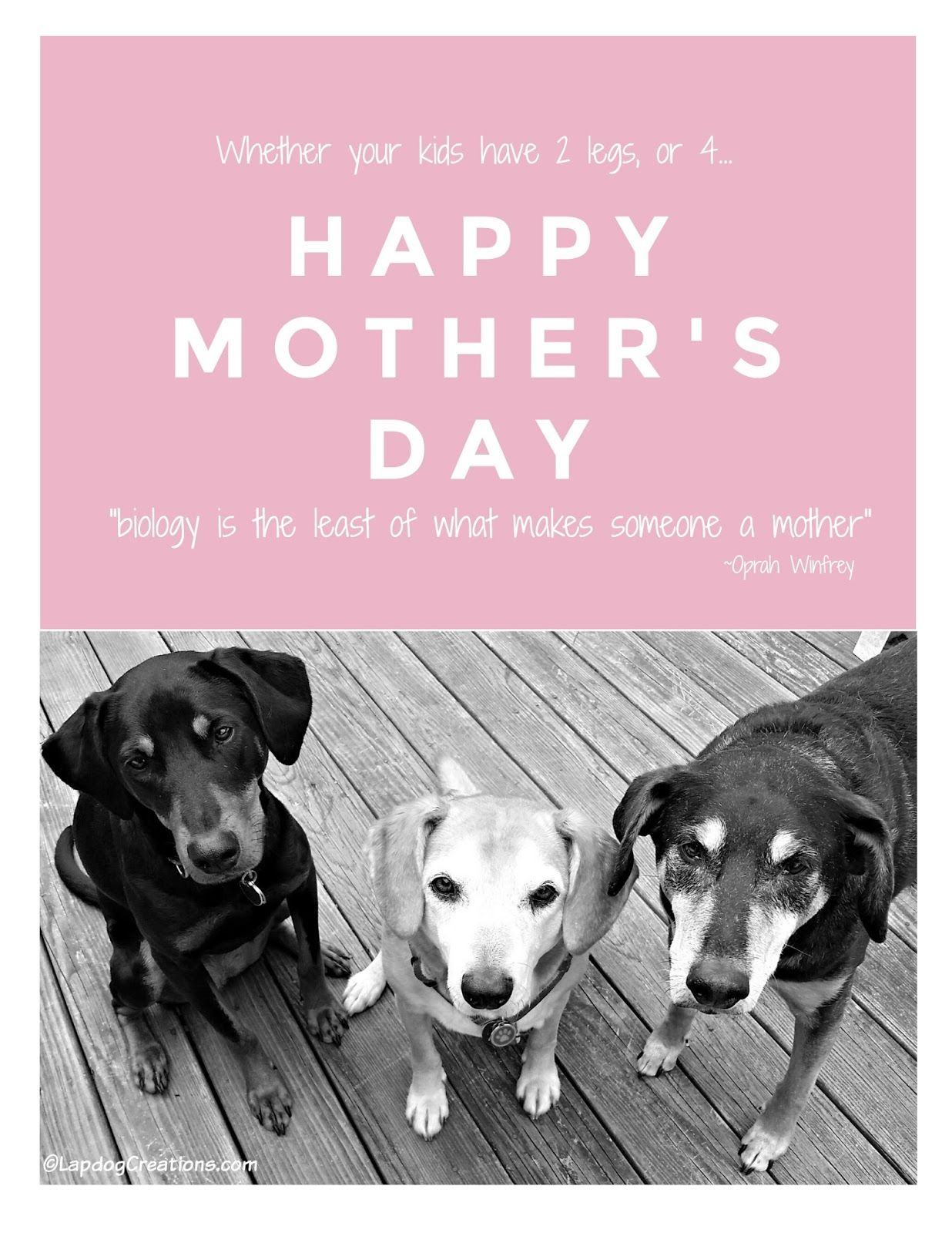 Happy Mommy S Day Mothersday Happy Dog Mothers Day Happy Mom Day Dog Mothers Day