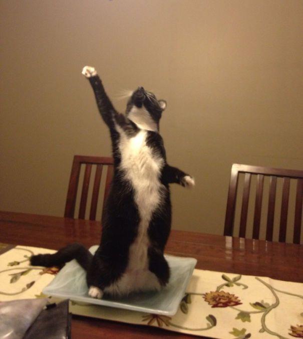 Triumphant Cat | Cat stands, Funny animals, Cats