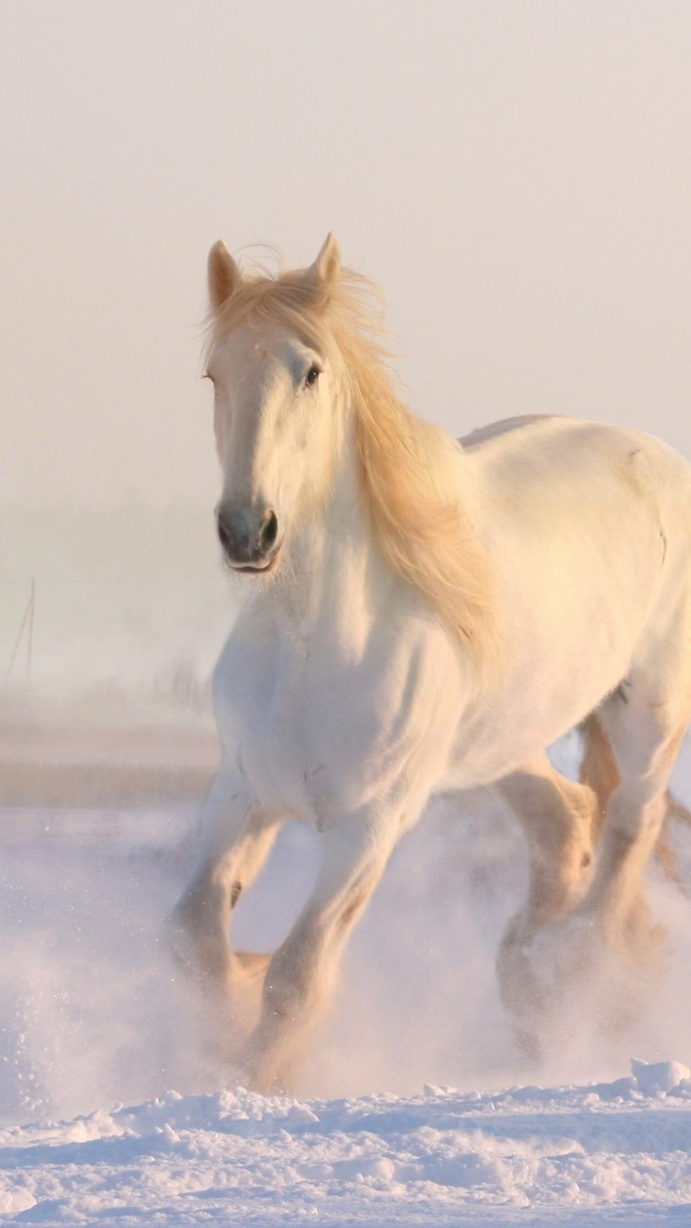 White Horse Running Through Snow Horse Wallpaper Horses Beautiful Horses