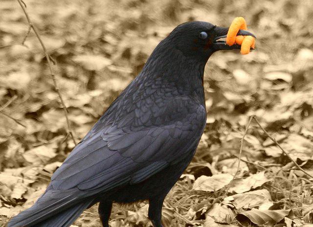 Hey...Stop Lookin At My Wotsits!!! by AmandaSaggi, via Flickr