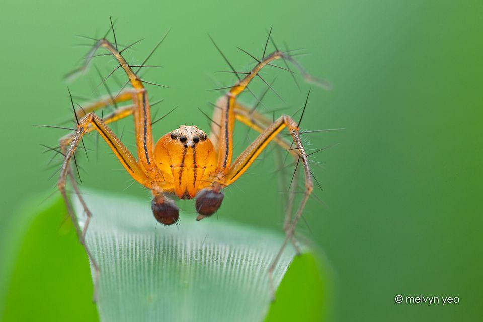 df52006f625e7a39f87ee1b49b6747f4 - How To Get Rid Of Crab Spiders In Hawaii