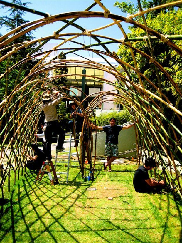 bamboo trellis for shade climbers or walkway