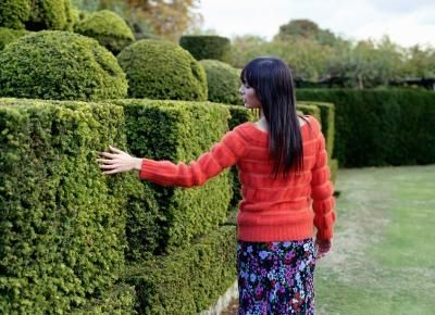 How To Trim Bushes Into Shapes Ehow How To Trim Bushes Box Wood Shrub Boxwood Landscaping