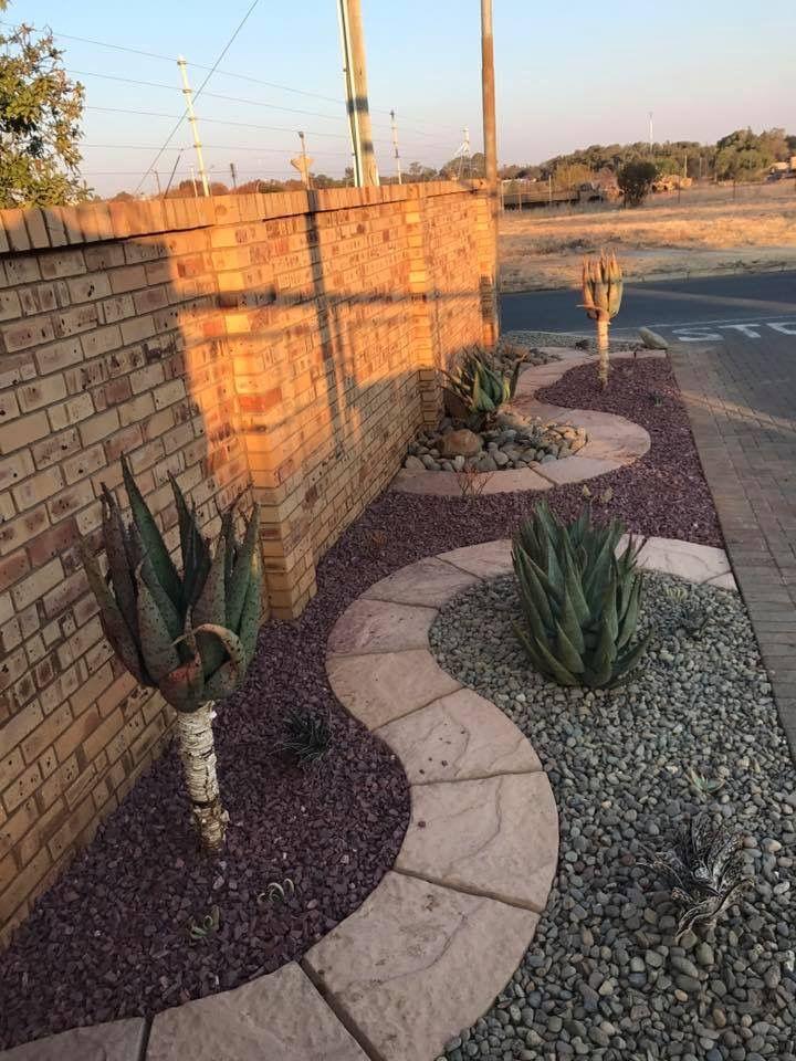 Aloes In A Water Wise Garden In Drought Stricken Bloemfontein