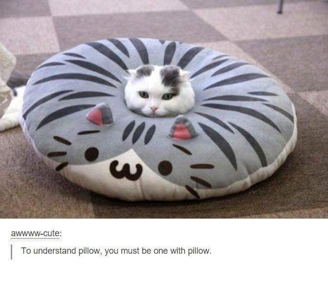 Be one with the pillow