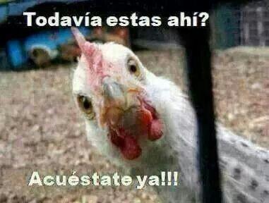 Trendy Memes Chistosos Mexicanos Buenas Noches Ideas Mexican Funny Memes Memes Funny Faces Memes