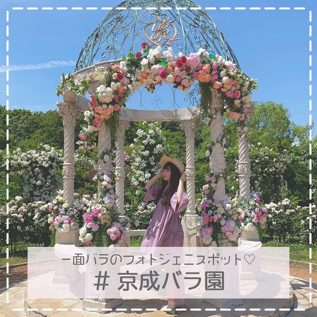 新たなインスタ映えスポットとしてじわじわ人気になっているのが 千葉県にある京成バラ園なんです 1 600品種 10 000株のバラが咲いている園内はとっても素敵な空間 どこで撮っても可愛く仕上がるので ガーリーなコーデでお出かけしてみては 京成バラ園
