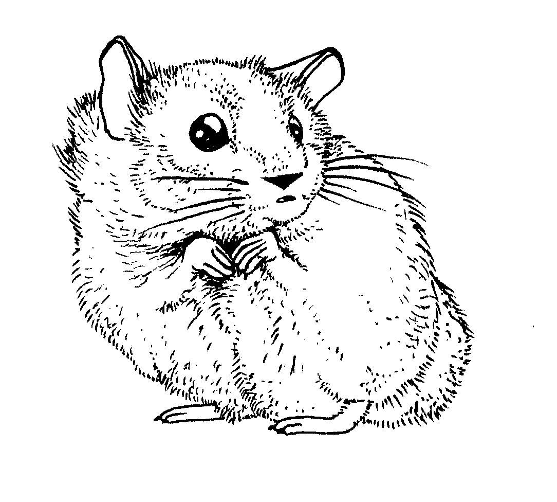 Hamster Coloring Pages Hamsters Coloring Pages Animals