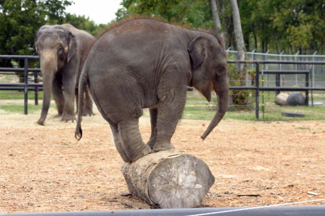 A refuge for retired circus elephants - The Endangered Ark Foundation