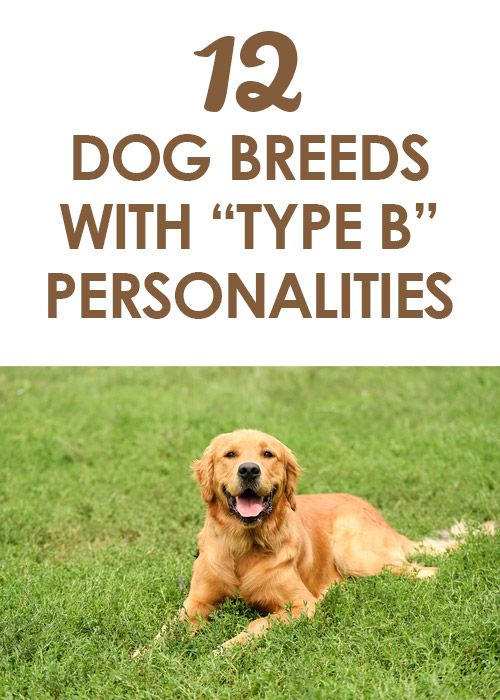 Http Iheartdogs Com The  Most Affectionate Dog Breeds