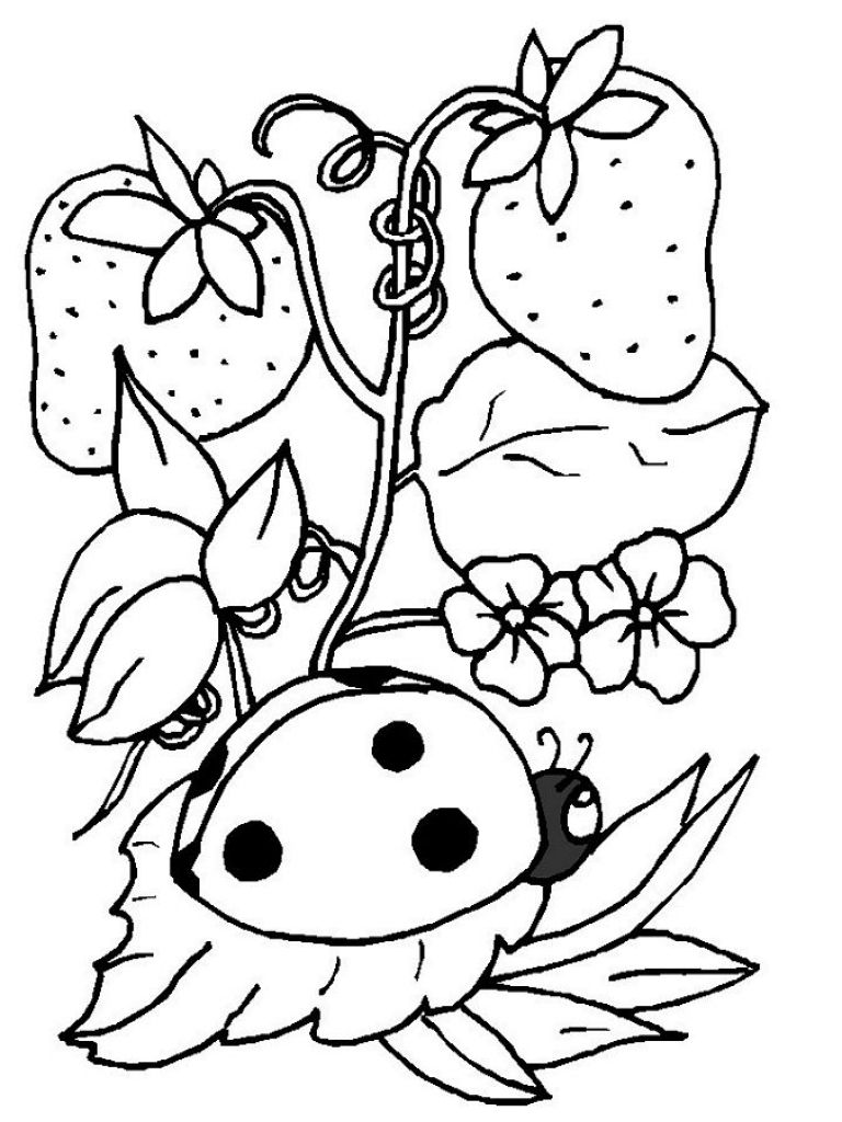 Ladybug And Strawberry Coloring Page To Print For Free | Animal ...
