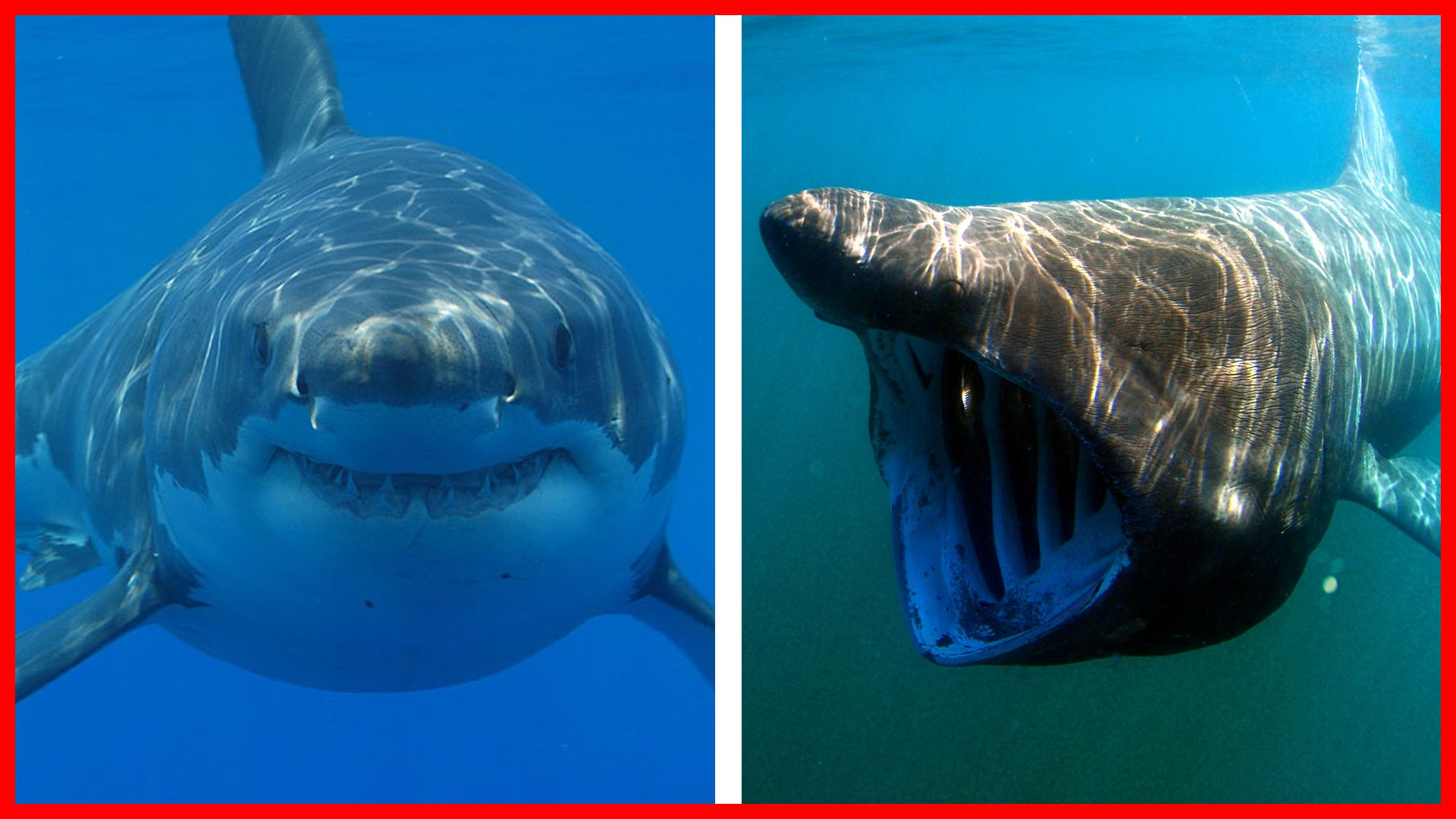 The Biggest Sharks In The World Watch The Video Here Shark