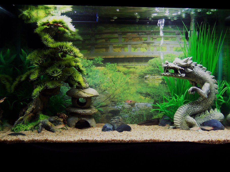 10 gallon zen tank animals pinterest aquariums for 10 gallon fish tanks