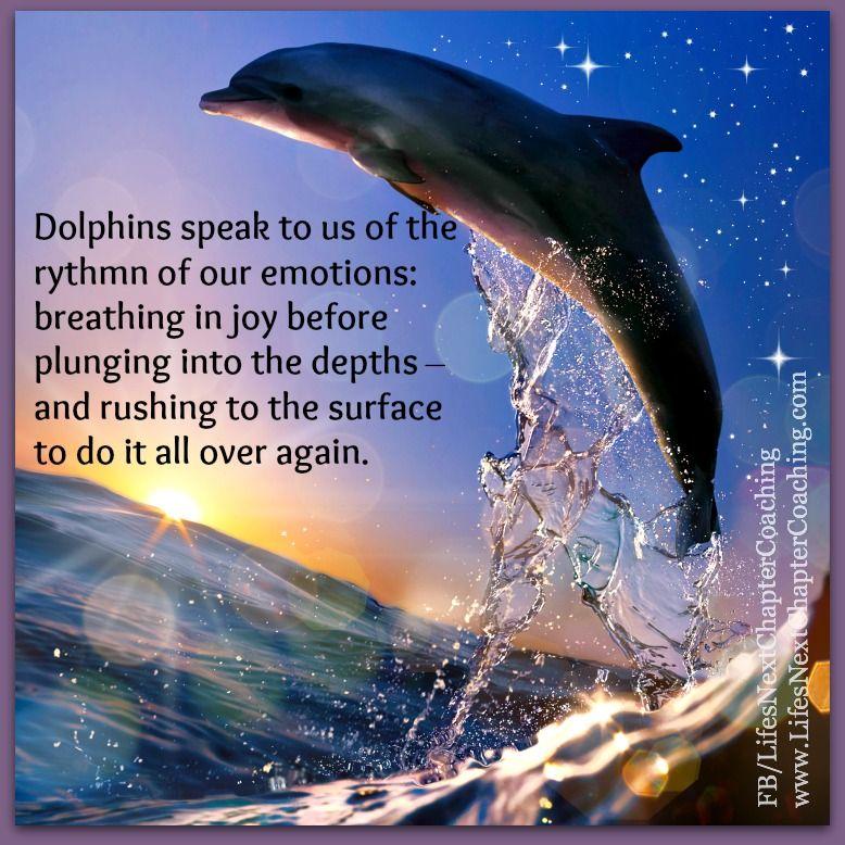 malvorlagen delfin lyrics  aglhk