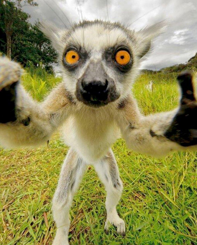 Animal selfies Amazing pictures of funloving creatures