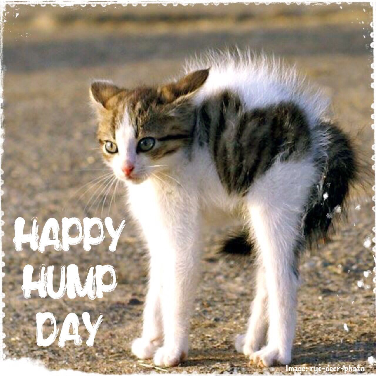 Wednesday Humor Happy Hump Day Animal Funny Cute Cat Halfway Through The Week Weekend Right Around The Corner Enjoy Today  F F  Aa