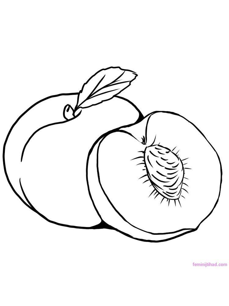 Peach Coloring Page Download Free Peach Or Is A Fruiting Plant