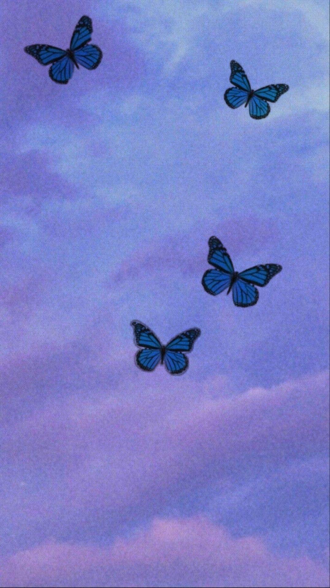 Wallpaper Butterfly In 2020 Butterfly Wallpaper Iphone Butterfly Wallpaper Iphone Wallpaper Tumblr Aesthetic