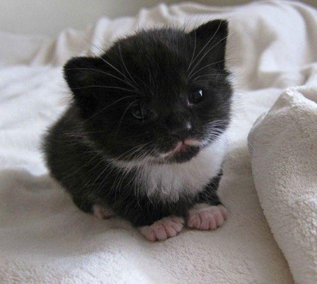 17 Фото мимишных котят для поднятия настроения!   Самые ...