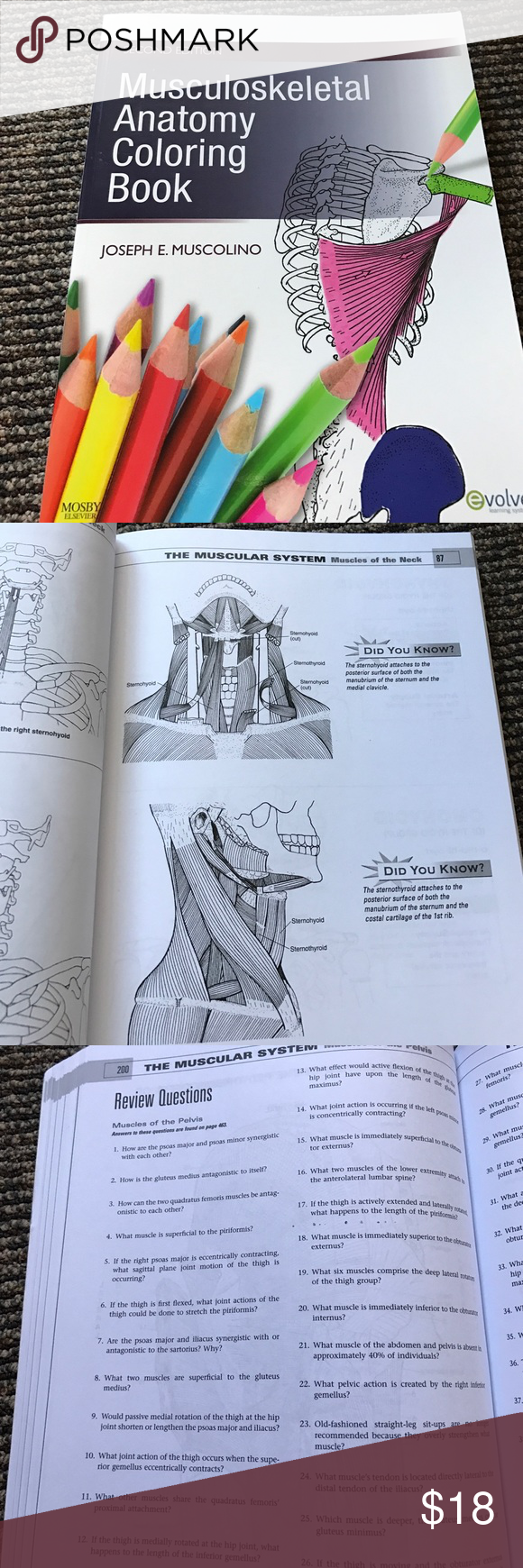 Musculoskeletal Anatomy Coloring Book Gently used. Please see images ...