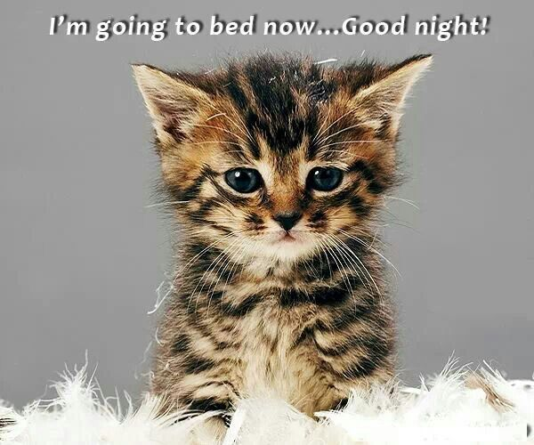 Good Night Cute Baby Animals Baby Animals Animals