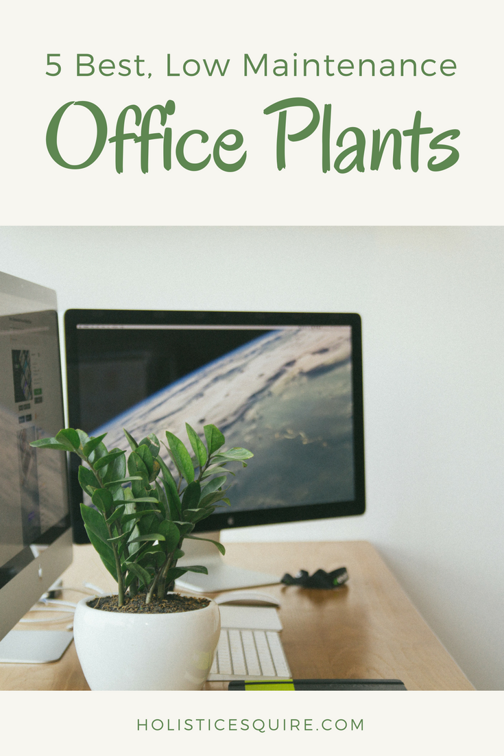 5 Best, Low Maintenance Office Plants For Productivity And Focus. Easy  Office Décor And Office Plants.