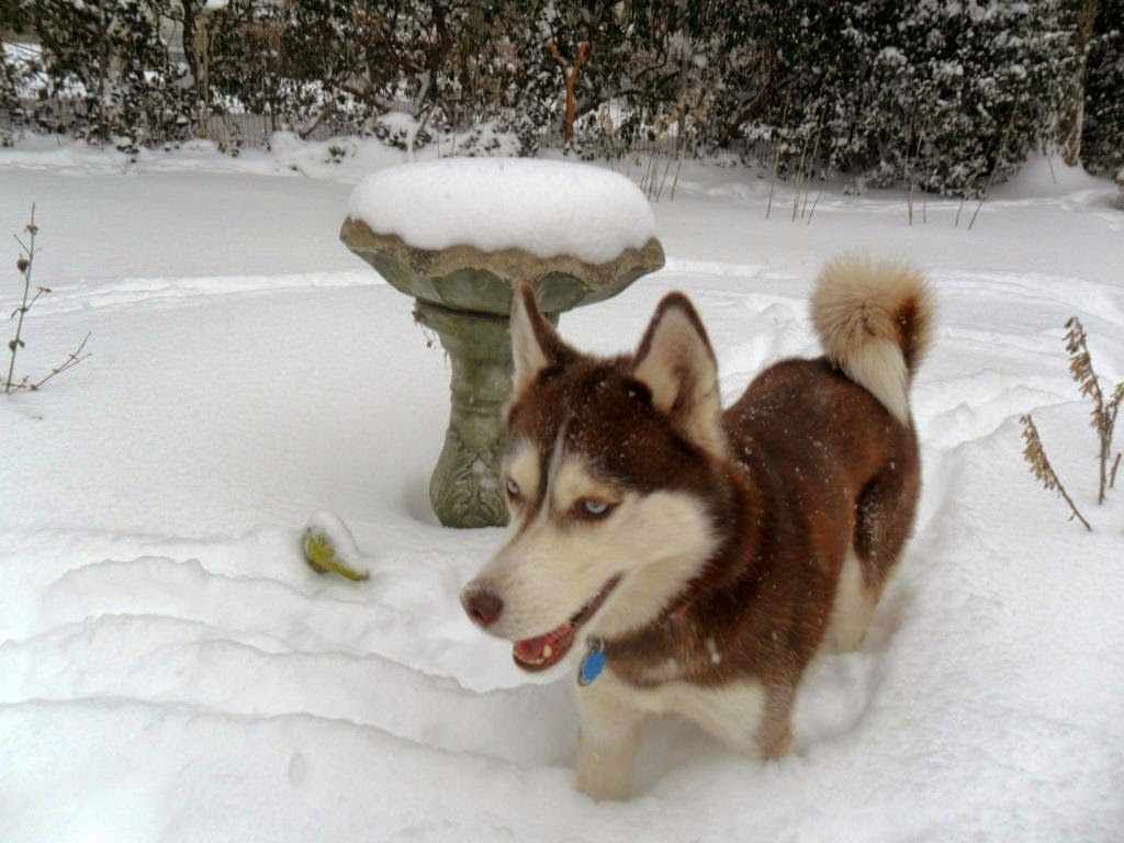 Dogs Luv Us And We Luv Them Wordless Wednesday Snowdog Dreamin Funny Dog Pictures Dog Photos Animals Friends