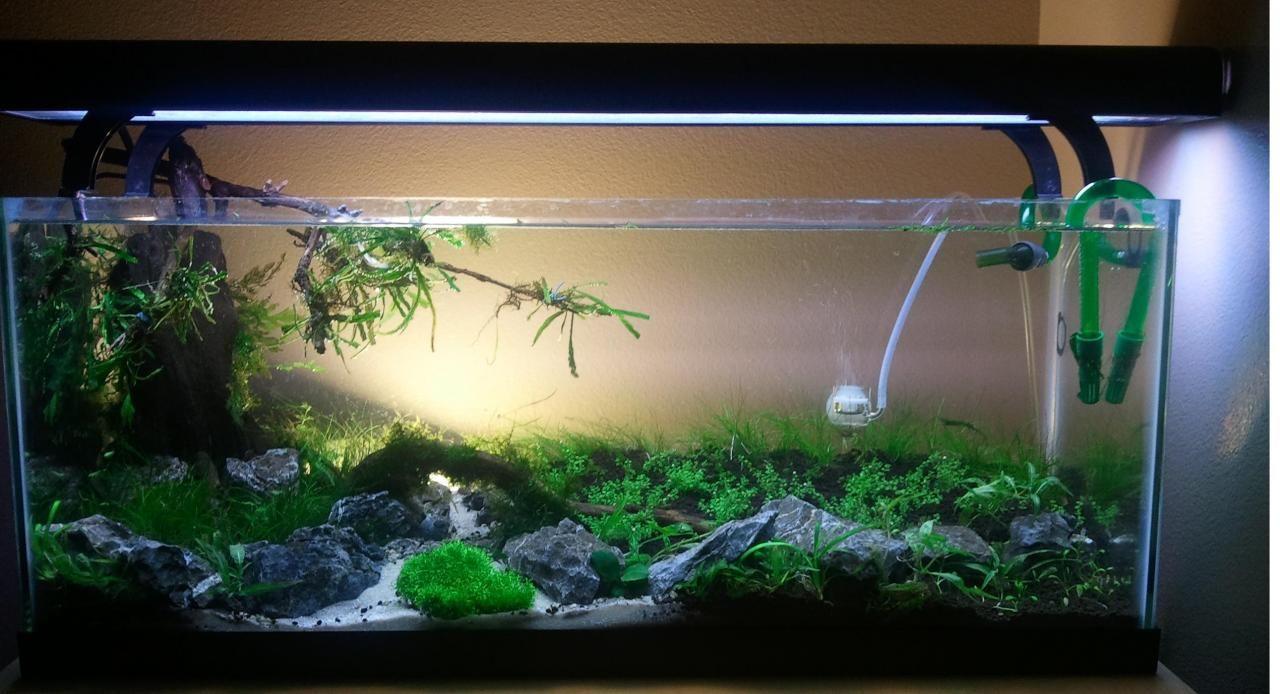 Freshwater fish tank ideas - 20 Gallon Planted Aquarium With White Sand