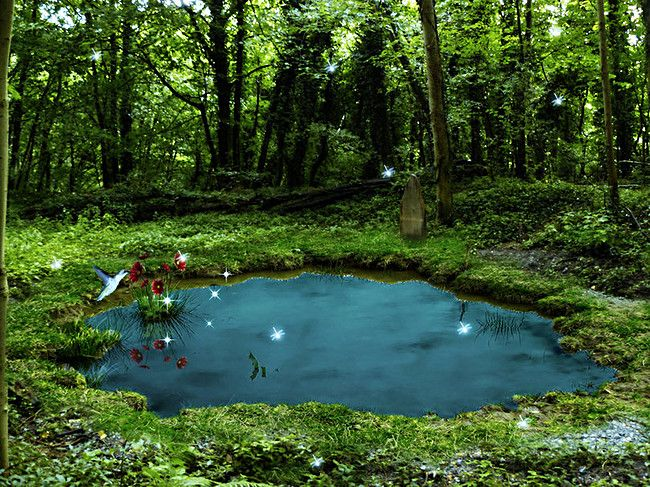 Forest Land River Landscape Background The magic faraway