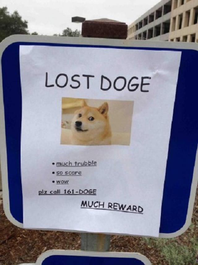 Funny Lost And Found Pet Posters Find Pets Funny Signs And - 20 hilarious lost pet signs