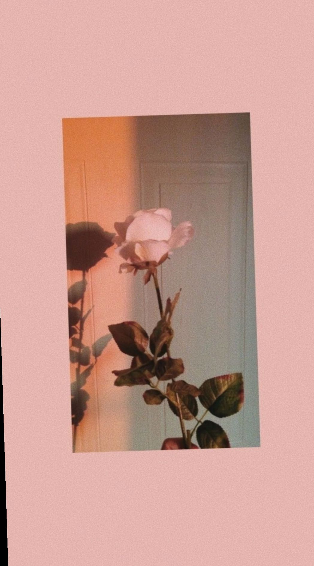 Wallpaper Iphone Aesthetic Tumblr Rose Total Update