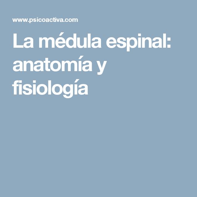 La médula espinal: anatomía y fisiología | María del Carmen Sánchez ...
