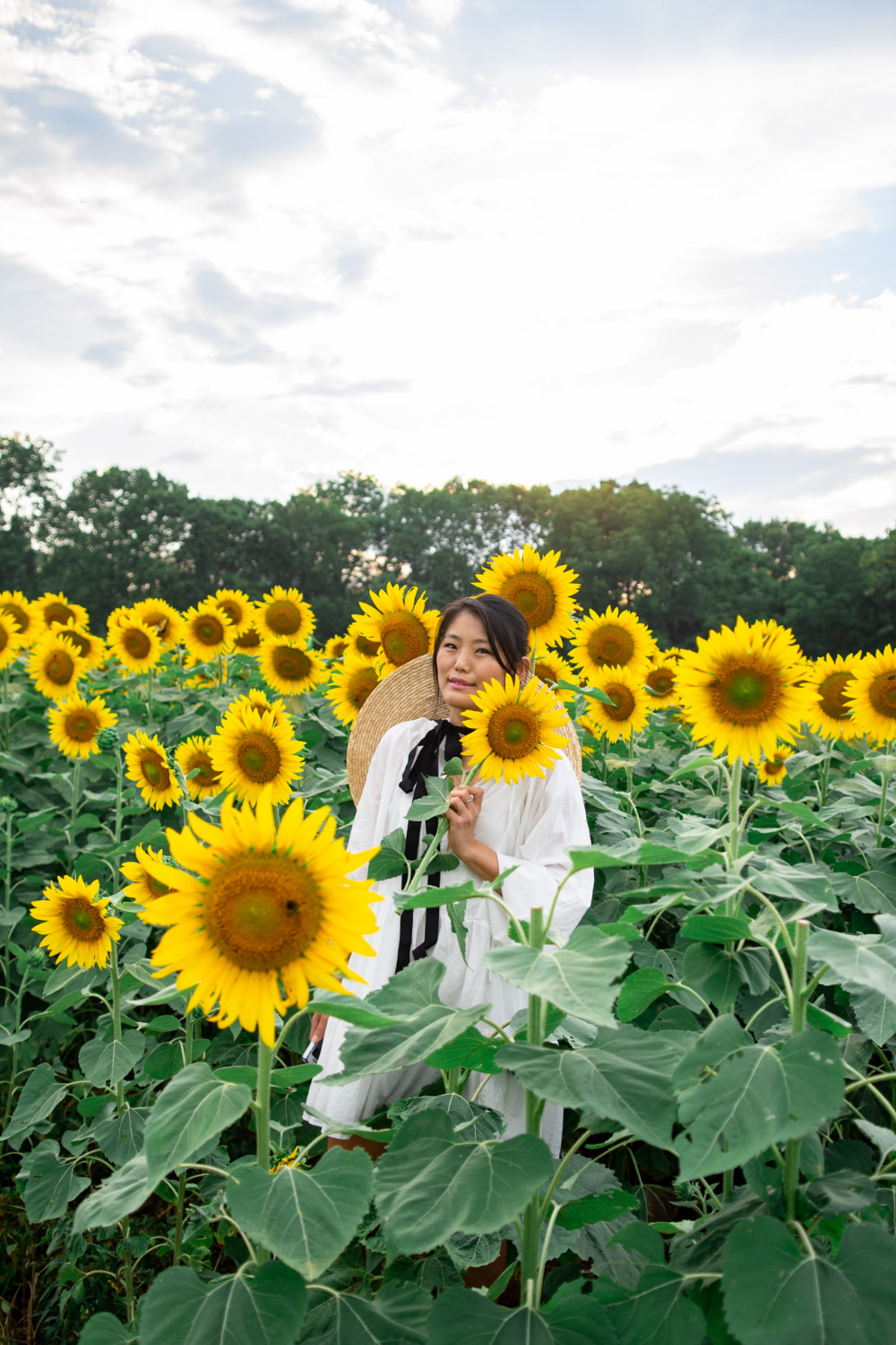 5 Sunflower Fields In Maryland Are Blooming If You Missed Mckee Beshers Sunflower Fields Types Of Sunflowers Pretty Gardens