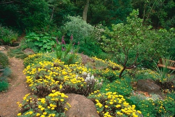 California Native Gardens Great Example Of Native Plants In The