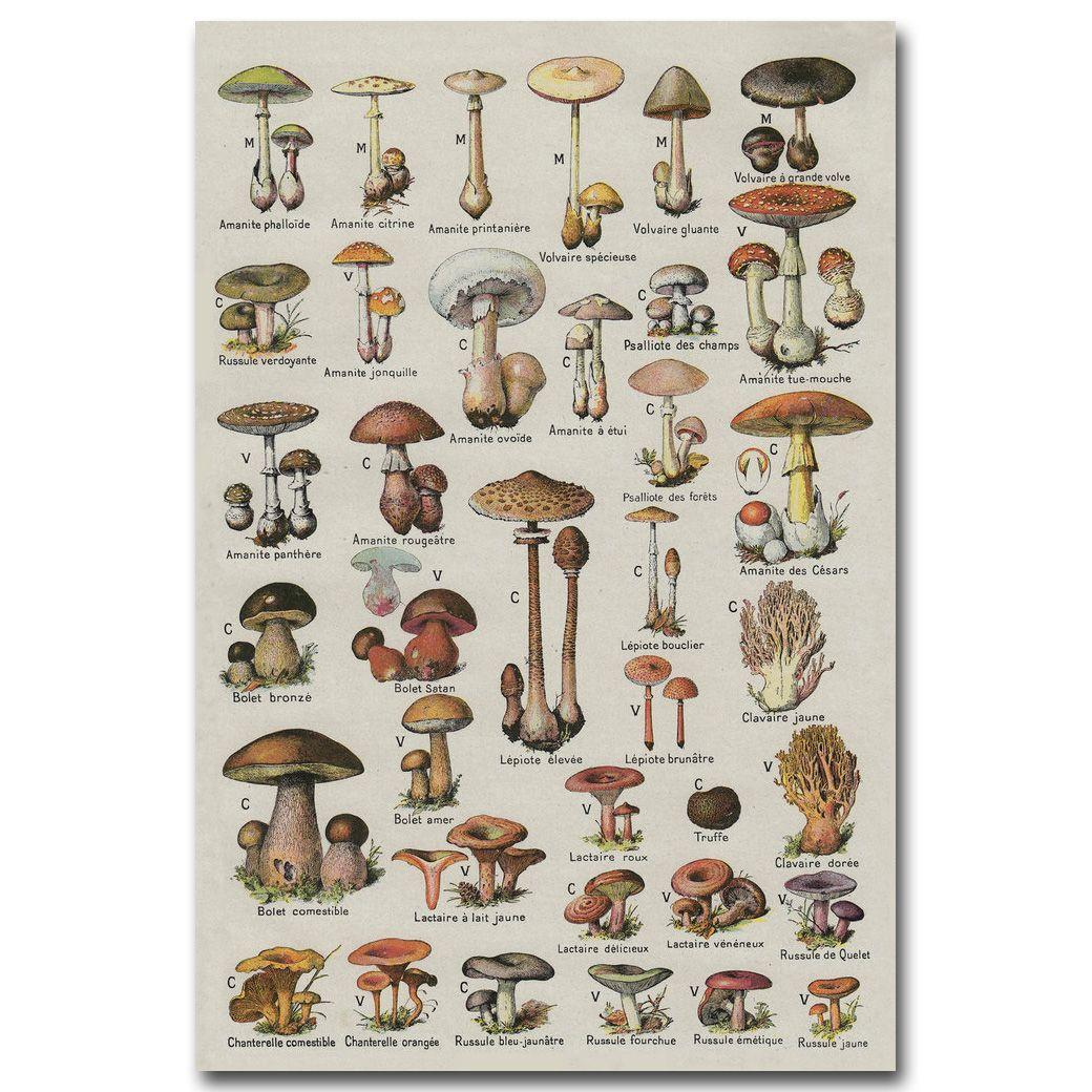 Mushroom Chart Science Art Silk Poster Fabric Print 12x18 24x36 Inches Biology Education Wall Picture Stuffed Mushrooms Botanical Prints Botanical Illustration