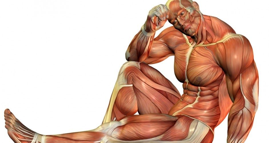 هل تعلم كم عدد عضلات جسم الانسان Human Anatomy Statue Fictional Characters