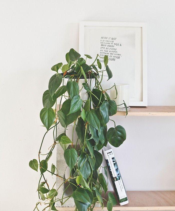 plante detoxifiante chambre