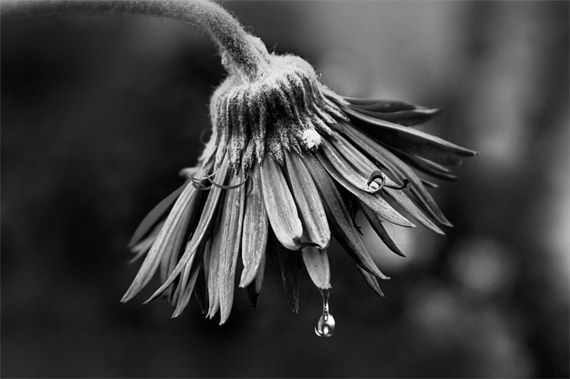 Black and white flower macro flower photography tips