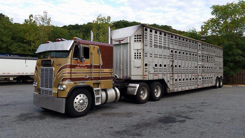 Freightliner Trucks Big Rig Trucks Freightliner