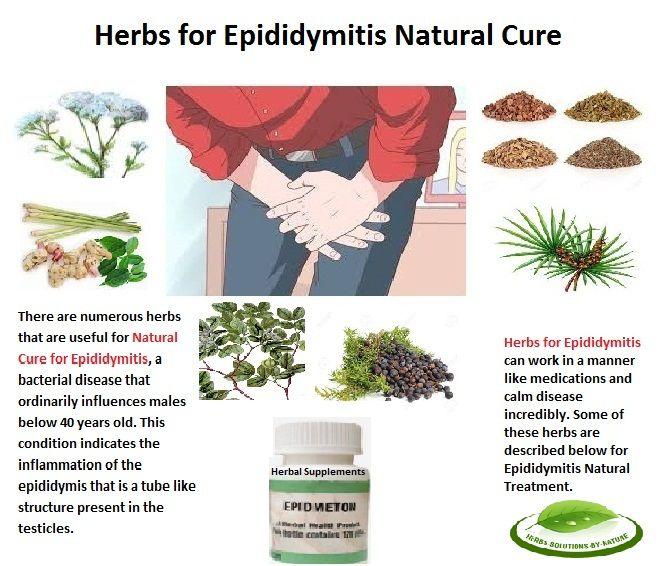 Chronic Epididymitis Natural Treatment